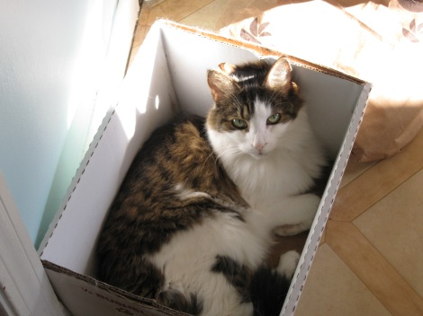 ...and Madeline. Kitty in a box!
